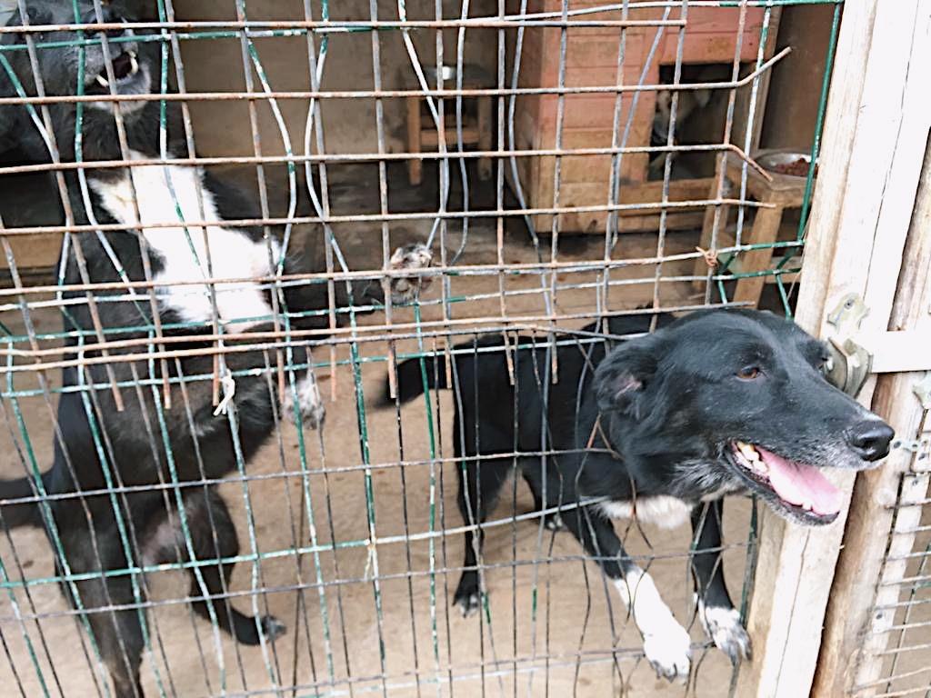 Активисты в Ярославле помогают бездомным животным 2