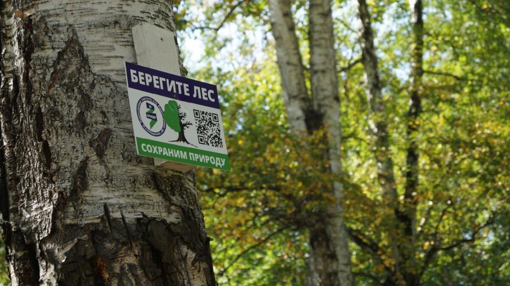 Нам больно смотреть, как медленно умирает наш лес 1