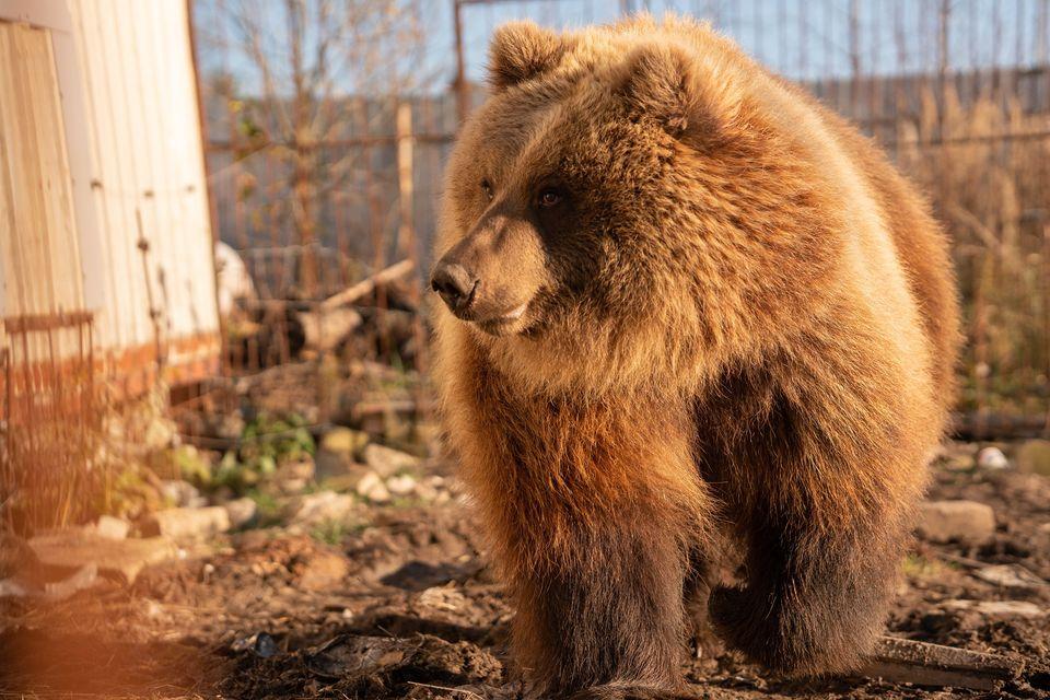 29 ноября большой субботник в центре реабилитации диких животных «Феникс» в Калужской области