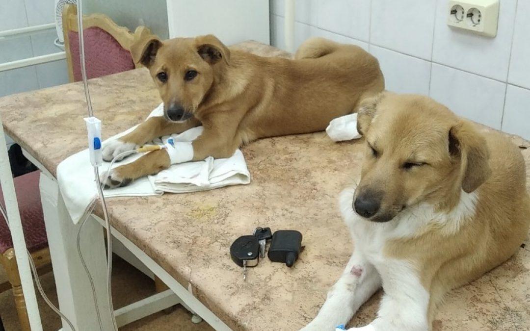 Бездомные животные тоже хотят жить