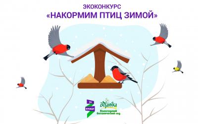 Экоконкурс  «Накормим птиц зимой» в Вологде
