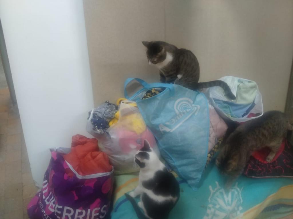 Гвардия Захара Прилепина помогает кошкам 1