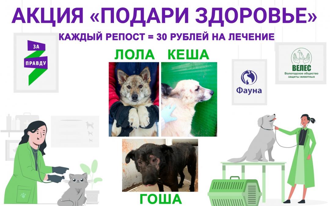 В Вологодской области продолжают дарить здоровья братьям меньшим
