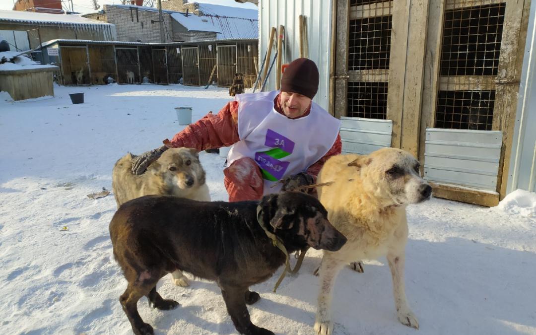 ЗА ПРАВДУ в Вологодской области спасли еще четырех животных – и это не предел