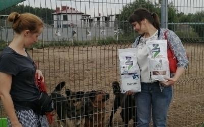 Химкинские активисты посетили приют для собак