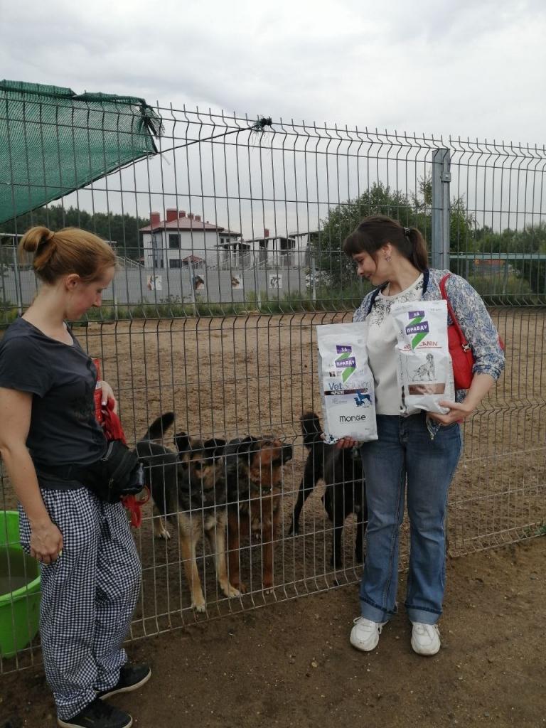 Химкинские активисты посетили приют для собак 2